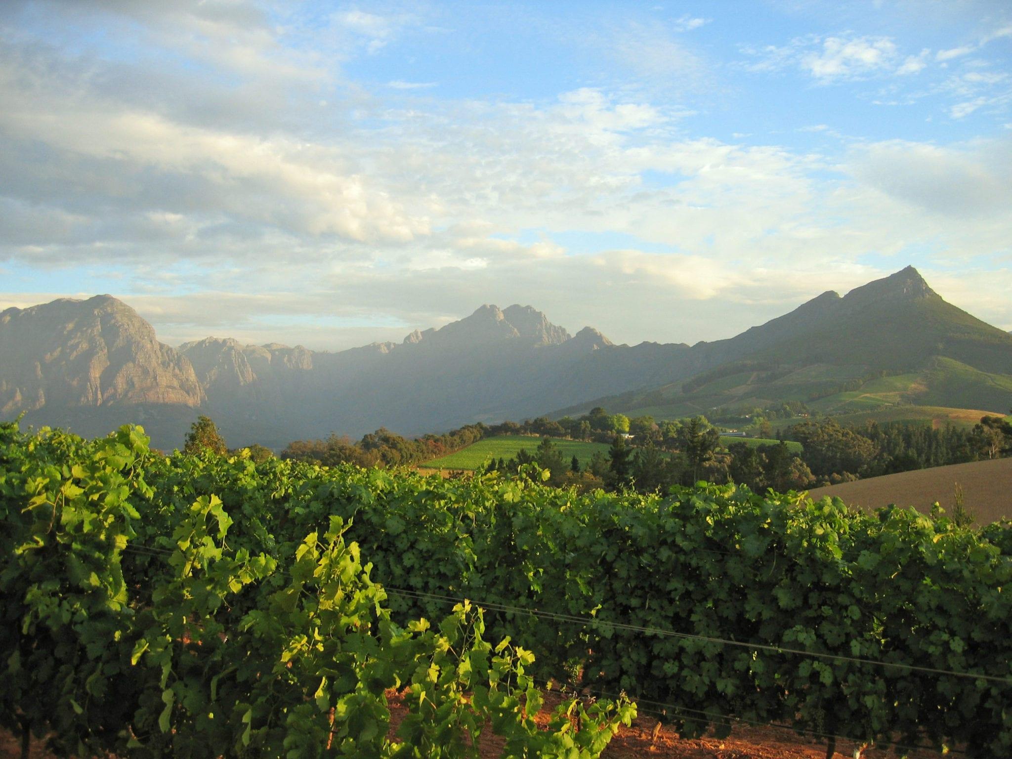 Die Cape Winelands