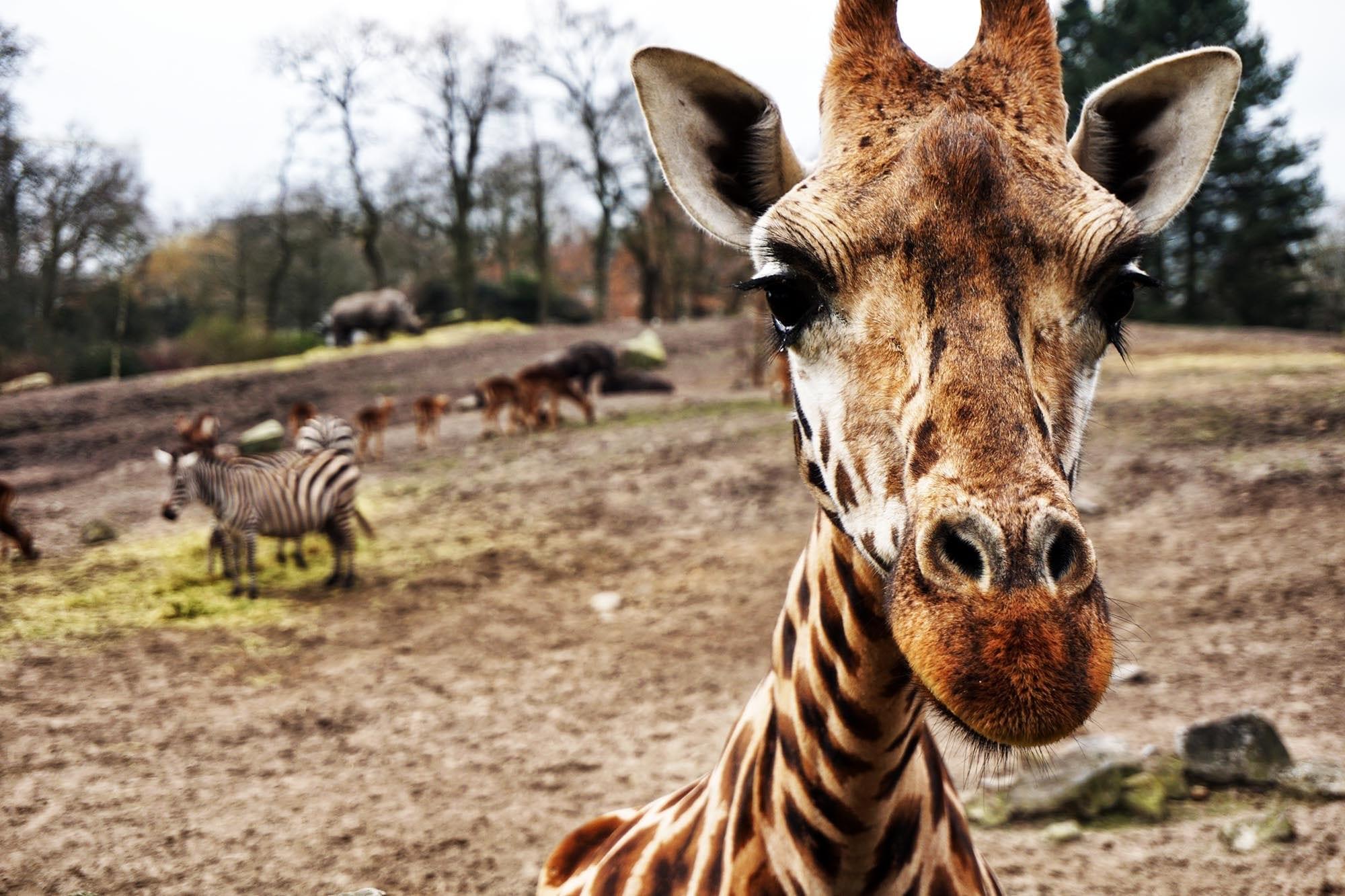 Eintägige Safari