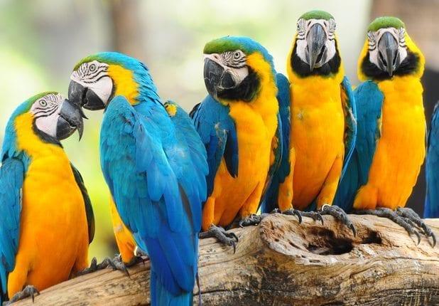 Robbeninsel & Welt der Vögel