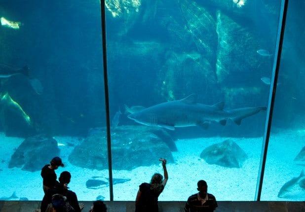 Zwei Ozeane Aquarium